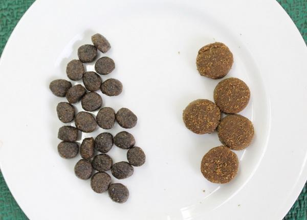 Когда и как часто можно менять корм чихуахуа?