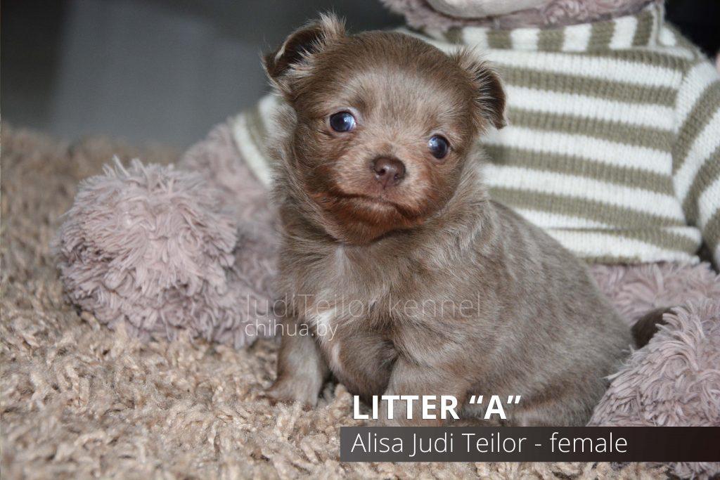 Alisa Judi Teilor — девочка (остается в питомнике)