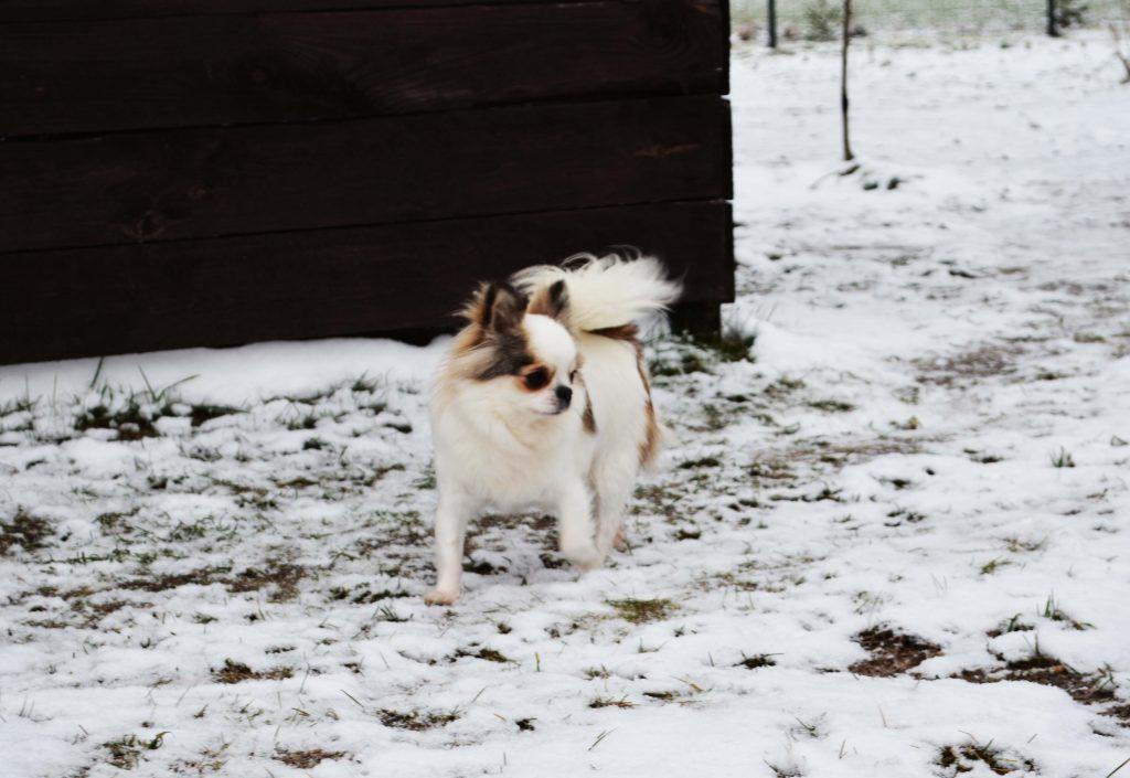 Зимние прогулки в нашем питомнике